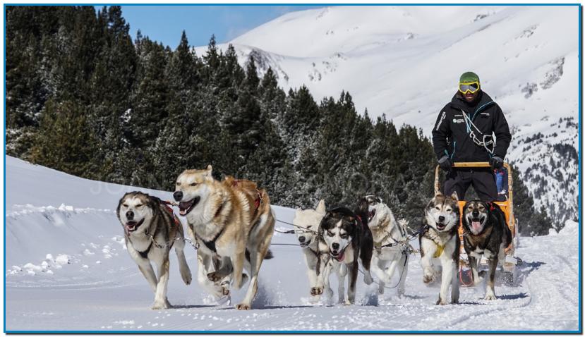 MUSHING ANDORRA 5 KM -  Sentirse como un auténtico esquimal por un día es muy fácil cuando te acercas a varios puntos del Pirineo ANDORRANO