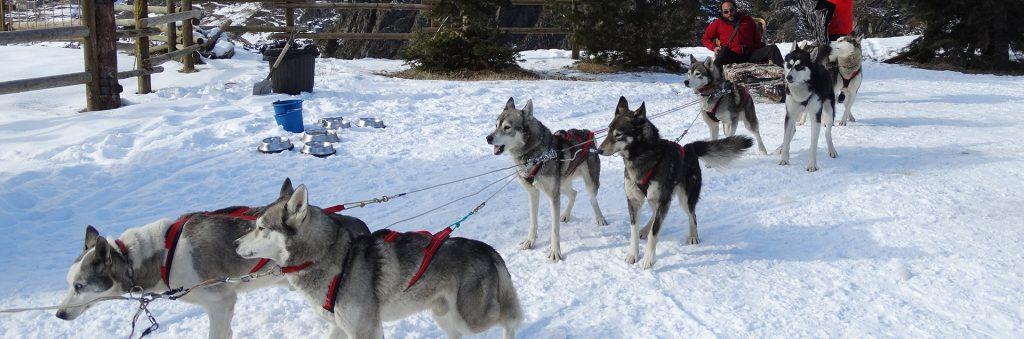 MUSHING Todas las empresas para hacer mushing en Andorra con precios y opiniones y excursiones de trineos de perros en nieve mushing en Andorra
