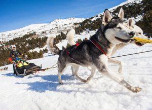 Desde hace más de 15 años realizamos excursiones guiadas en moto de nieve con salidas desde diferentes puntos del Principado de Andorra sobre todo en el Cap del Port en el Port d'Envalira (variamos según el estado de la nieve). Nuestra filosofía: que lo paseis bien, de forma segura, haciendo que la actividad sea una experiencia única. Hacemos rutas de todo tipo: diurnas, nocturnas, puesta de sol o la luna llena... Todo un abanico de posibilidades entre las que seguro encontrarás la actividad de moto de nieve que estás buscando! MOTO DE NIEVE DIURNA 30 minutos, 60 minutos, Ruta Extrem y Ruta Luna llena. Ideal para familias, parejas y grupos de amigos o incentivos. La ruta diurna es una excursión fuera de pistas que permite disfrutar de la nieve, el motor y la naturaleza a partes iguales. Salidas: Realizamos salidas en Motos de Nieve todos los días de la temporada de nieve de lunes a domingo. Recorrido: Hacemos un recorrido mixto por el bosque en todas las rutas y con subida hasta la cima en rutas de 1 y 2 horas. El recorrido a seguir lo selecciona el guia en función del estado de la nieve y del nivel de los participantes. Hacemos parada a mitad de la ruta durante 5 minutos para fotografías. Después, regresó al punto de salida por la misma ruta o por otra alternativa (y como siempre... decide el guía experto en motos de nieve!). Nivel de conducción: Esta ruta es ideal ya que se puede adaptar a todos los niveles: el guía, hace una pequeña reunión con vosotros antes de salir y en función de lo que comentais en esta charla, del tipo de grupo, y de las aptitudes y necesidades que el vea, adaptará el recorrido y la velocidad de ruta, garantizando siempre al 100% la seguridad del grupo, y por supuesto, garantizando la diversión! En definitiva: una excursión apta para disfrutar por familias con niños y mayores, pero también una auténtica experiencia para parejas y grupos de amigos que buscan vivir sensaciones...! UNA EXCURSIÓN CON MUCHO ENCANTO ¡Ideal para hacer en pareja! T