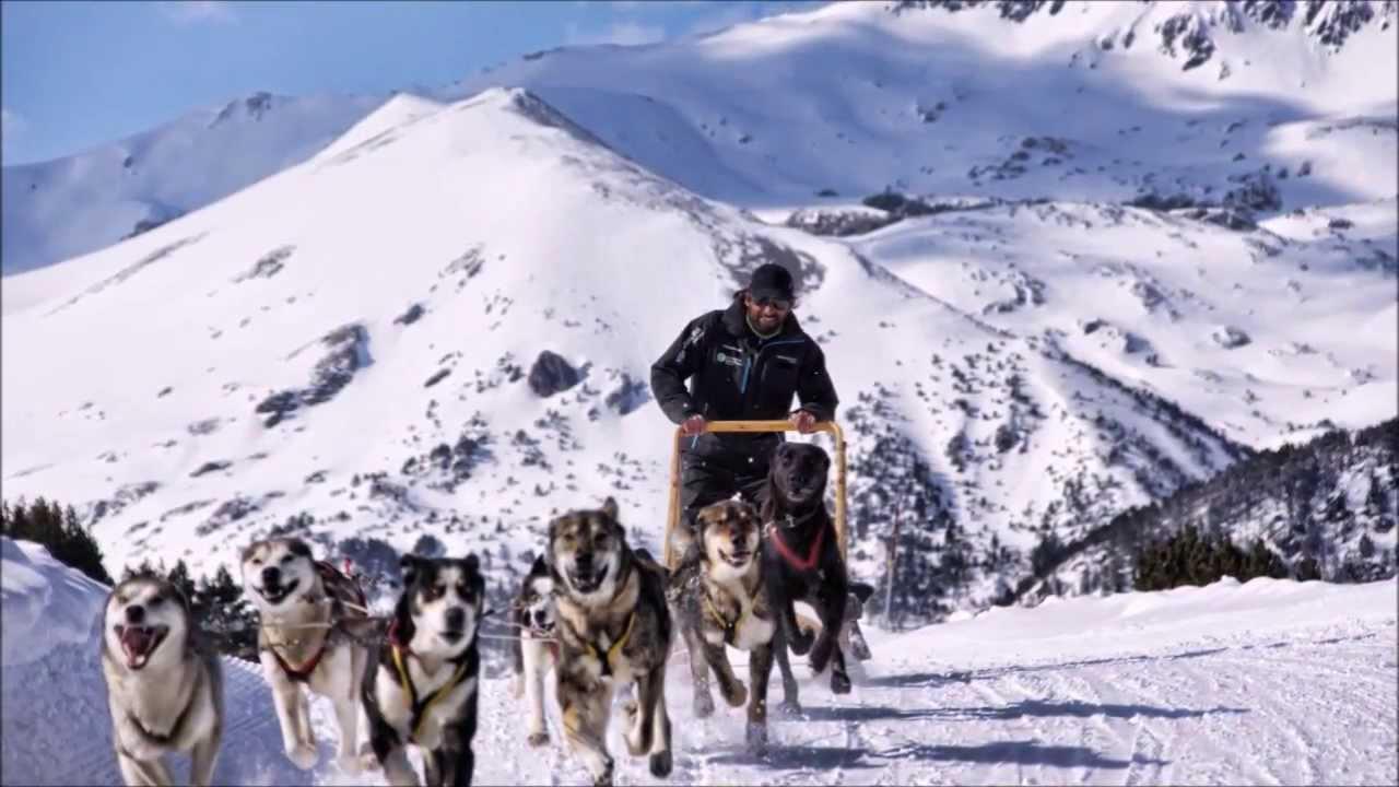 MUSHING 5 KM Inolvidable! Mushing Andorra Perros de trineo para adultos Paseo con trineo de perros por las montañas de Andorra circuito de 5 kmEl trineo de perros va conducido por unmusherprofesional y titulado y los pasajeros van sentados en el trineo